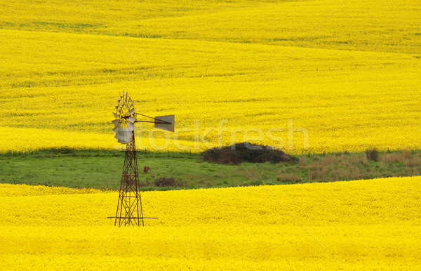 Windmill in a field of Canola Stock photo © lovleah