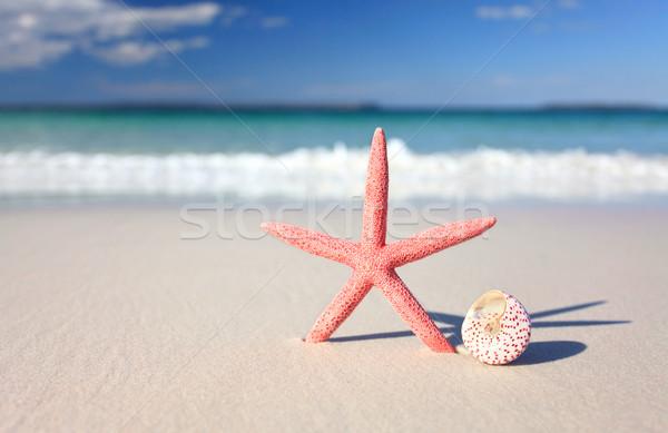 Sea star and seashell on the seashore Stock photo © lovleah