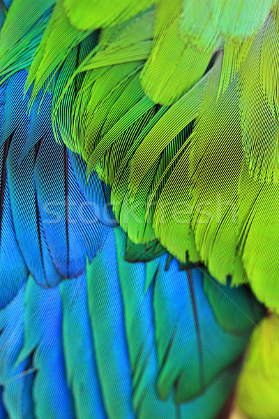 Madár tollazat tollak közelkép madarak színes Stock fotó © lovleah