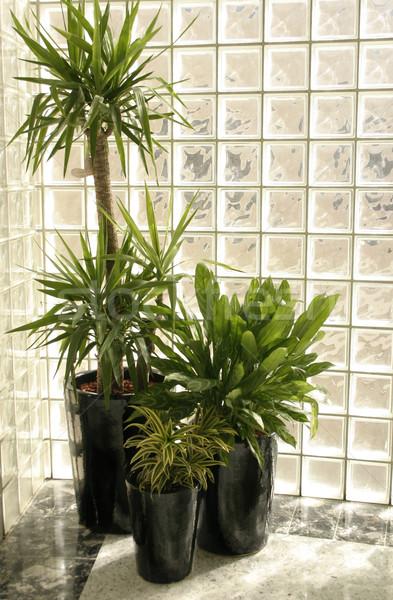 Indoor Plants Stock photo © lovleah