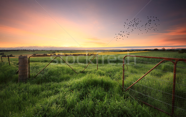Rusty gates open to wheat and canola crops Stock photo © lovleah
