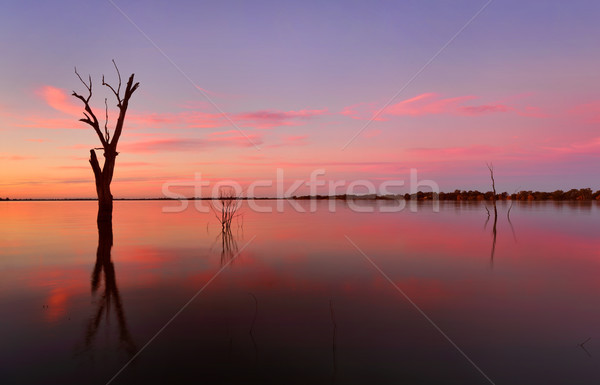 Submerged trees in a lake at sunset Stock photo © lovleah