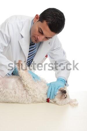 Veterinary checkup Stock photo © lovleah