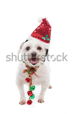 Stock photo: Puppy dog wearing Christmas tree hat