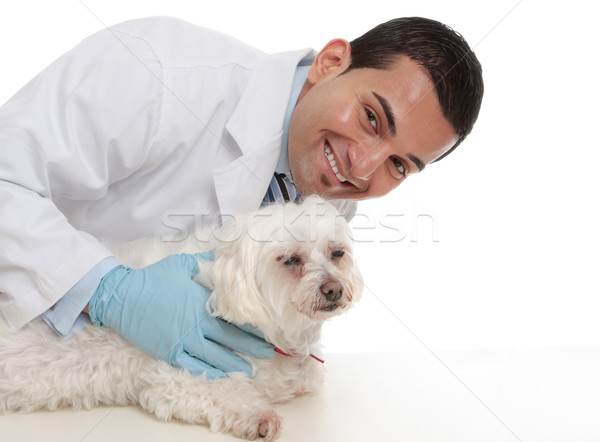 Friendly caring vet with a sick animal Stock photo © lovleah