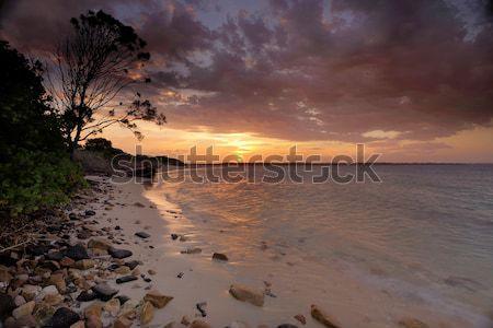 Puesta de sol botánica Sydney verano plata playa Foto stock © lovleah