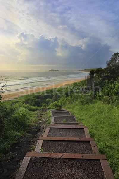 парка пляж древесины пути собственный Сток-фото © lovleah
