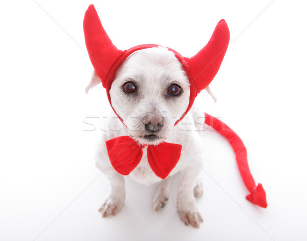 Little Devil Dog Stock photo © lovleah