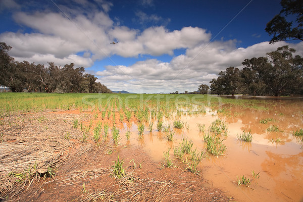 Flooded crops in Central West NSW Stock photo © lovleah