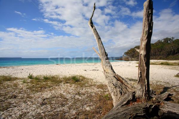 Greenfields Beach Jervis Bay Australia Stock photo © lovleah