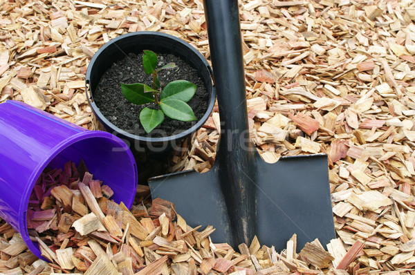 garden mulch and tools Stock photo © luapvision