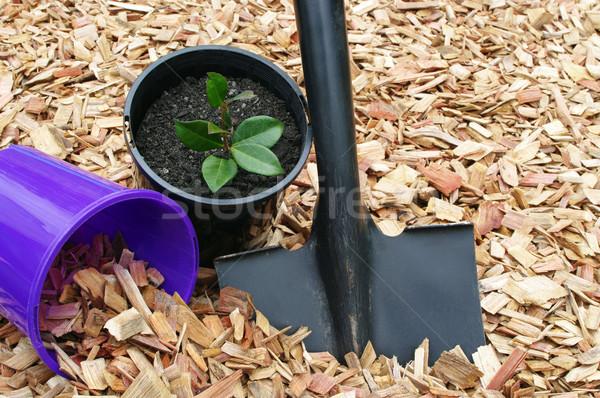 Tuin tools zwarte schop Stockfoto © luapvision