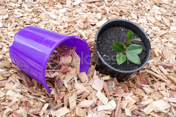 mulch and potted plant Stock photo © luapvision