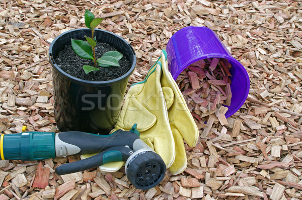 mulch plant and hose Stock photo © luapvision