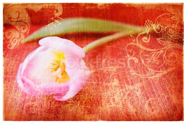 Rose tulipe orange grunge papier page Photo stock © lubavnel