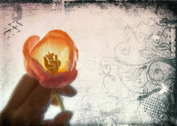 Grunge page of woman's hand with tulip Stock photo © lubavnel