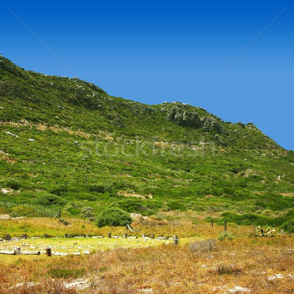Hill in Cape Point Nature reserve Stock photo © lubavnel
