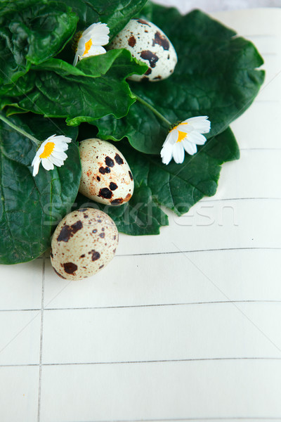 птица яйца ноутбук Пасху пространстве текста Сток-фото © lubavnel