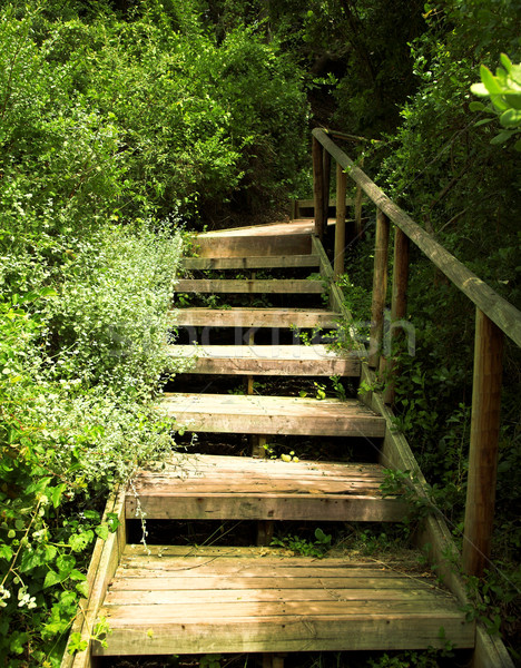 Wooden stairs in green bushes Stock photo © lubavnel