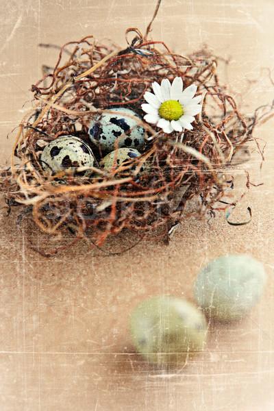 птица яйца гнезда цветы весны фон Сток-фото © lubavnel