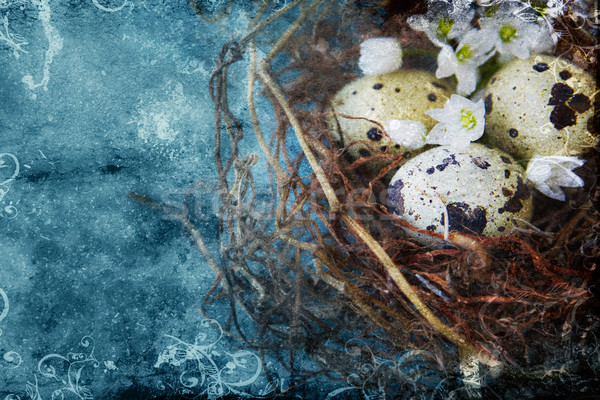 quail nest with spotted eggs. Stock photo © lubavnel