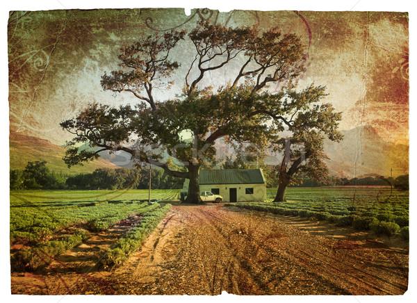 Grunge oak and lavender Stock photo © lubavnel