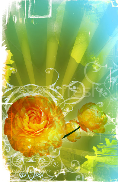 Foto stock: Grunge · página · flores · projeto