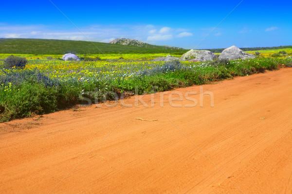 Stock photo: Road in flower field