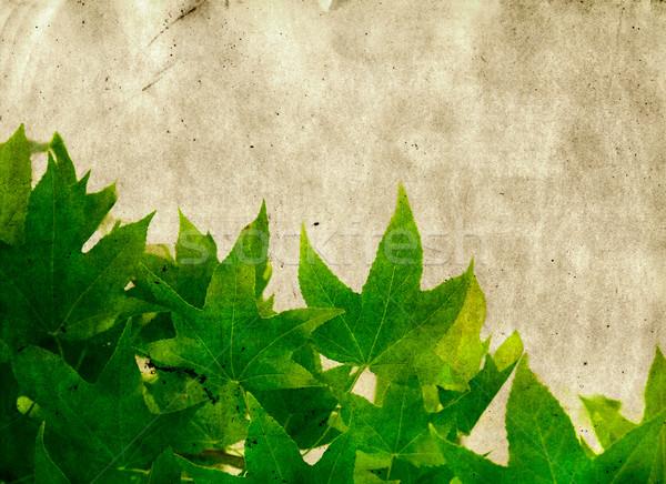 Grunge akçaağaç yaprakları yeşil kağıt dokusu uzay Stok fotoğraf © lubavnel