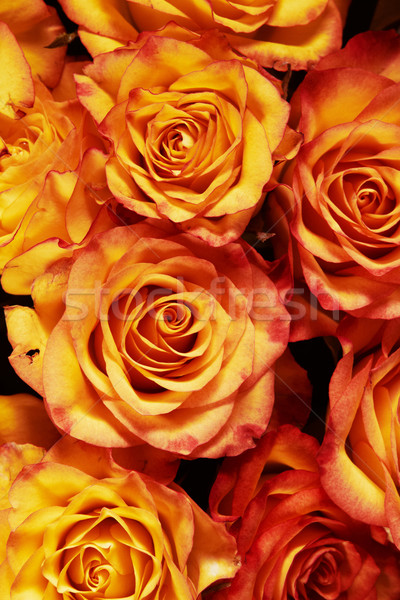 beautiful bouquet of roses Stock photo © lubavnel
