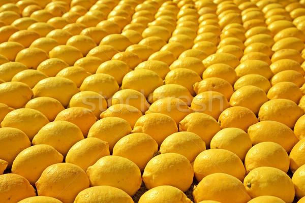 rows of lemons Stock photo © lubavnel