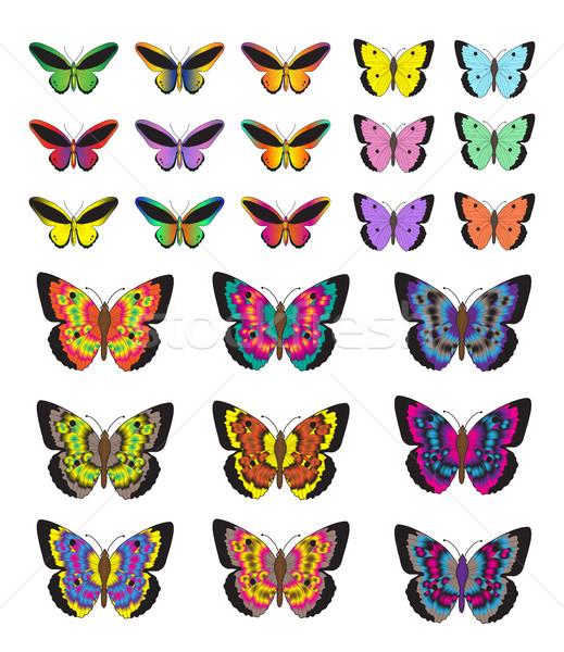 Borboleta conjunto isolado branco borboletas Foto stock © lucia_fox