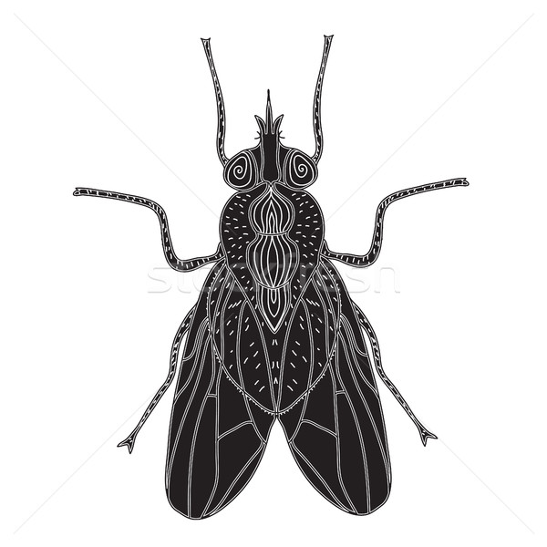 Fly insect silhouette. Fly sketch a tattoo. Doodle style. Modern design. Vector illustration Stock photo © lucia_fox