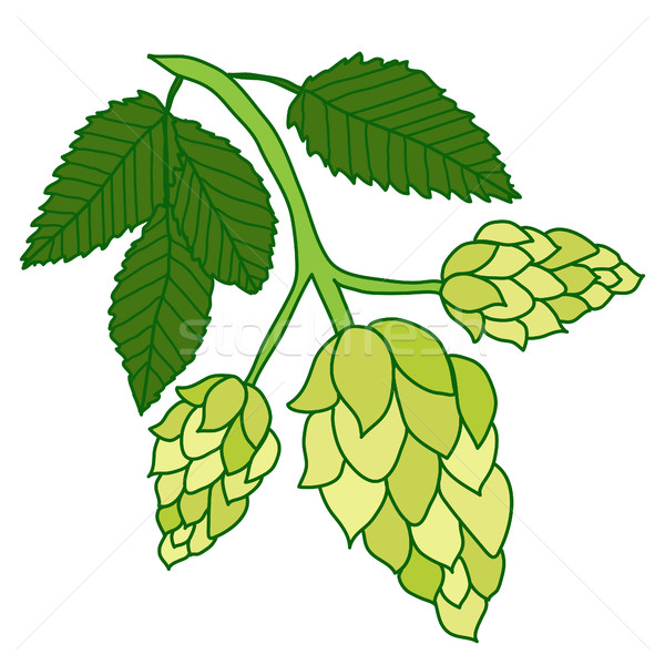 Hops plant isolated on white background, hand drawing style. Vector illustration Stock photo © lucia_fox
