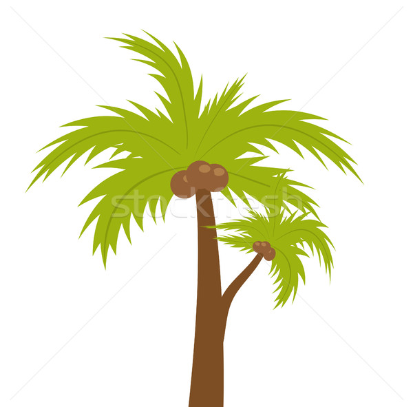 Palm tree. icon flat, cartoon style. Summer, beach concept isolated on white background. Vector illu Stock photo © lucia_fox