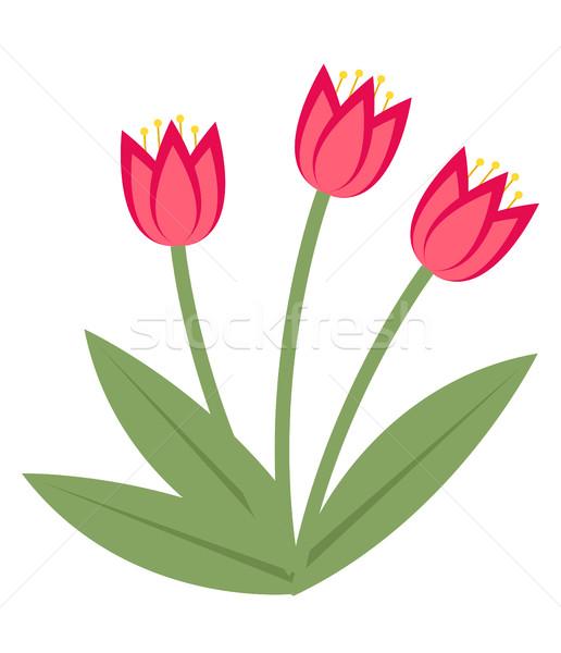 Stock fotó: Virágcsokor · rózsaszín · tulipánok · ikon · stílus · izolált