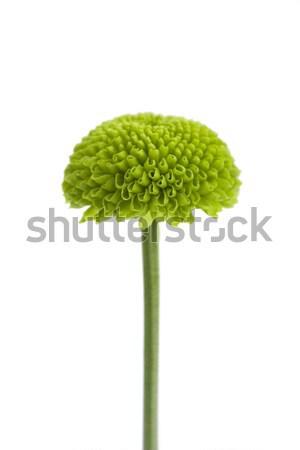 Groene witte blad plant bloemblaadjes geïsoleerd Stockfoto © lucielang