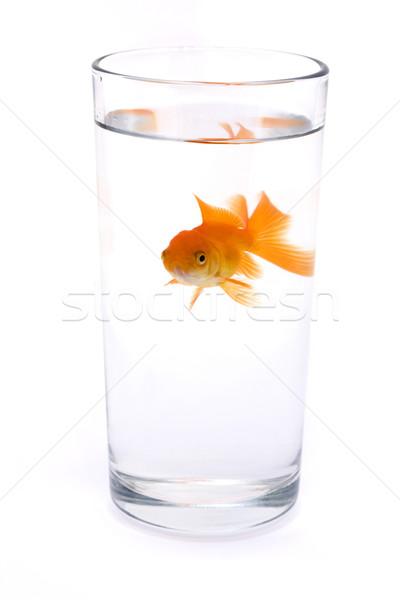 Goldfish vetro acqua bianco occhi abstract Foto d'archivio © lucielang