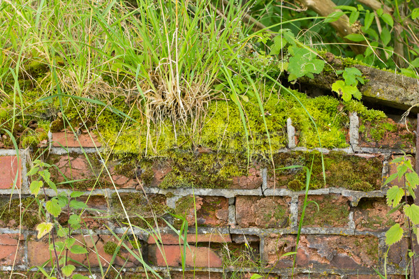 Moss and weed covered crumbling wall background Stock photo © lucielang