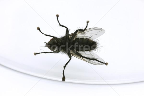 Volar atrapado vidrio blanco fondo animales Foto stock © lucielang