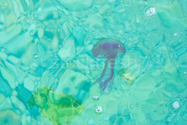 Lila meduza lebeg kék tenger víz Stock fotó © lucielang