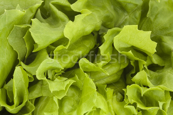Close up of a fresh green lettuce background Stock photo © lucielang
