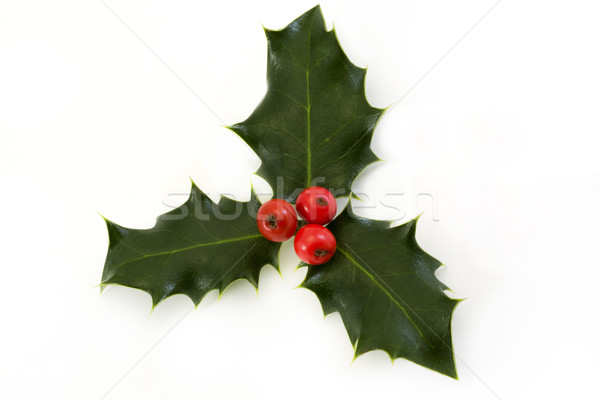 Sprig of holly with berries over white Stock photo © lucielang