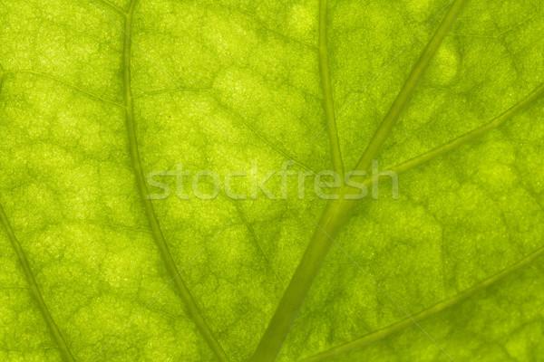 Stockfoto: Macro · groen · blad · textuur · licht · blad · achtergrond