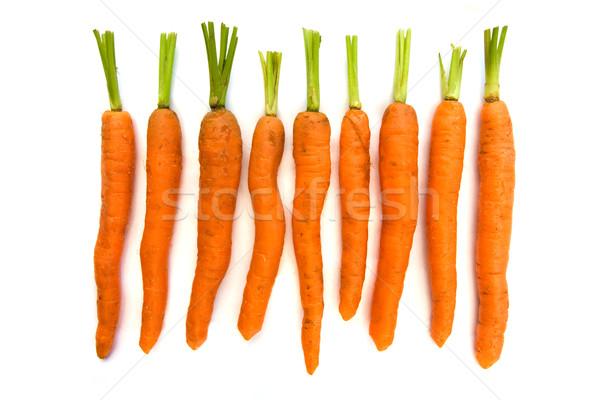 Stock photo: Line of organic carrots with green tops over white