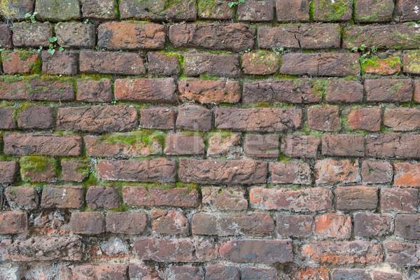 Mos gedekt oude muur textuur muur Stockfoto © lucielang