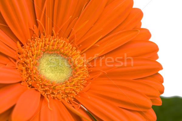 オレンジ 庭園 葉 頭 美しい ストックフォト © lucielang