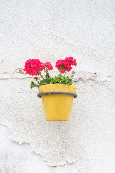 Wall mounted flower pot. Stock photo © lucielang
