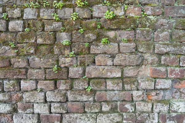 Background of a brick wall with moss and weeds Stock photo © lucielang