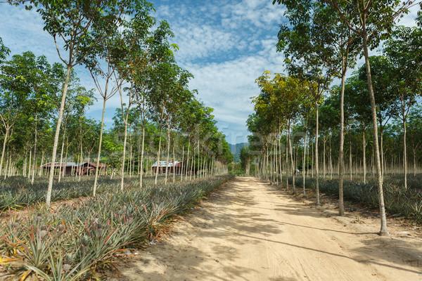Tropische vruchten veld vers sappig voedsel vruchten Stockfoto © luckyraccoon